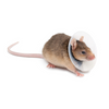 Saf-T-Shield Lightweight Collars - Rodents