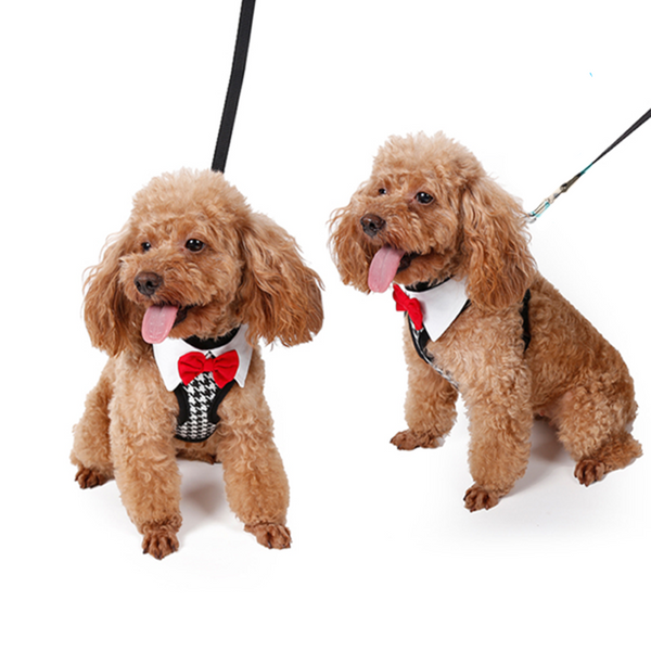 Bow Tie Harness for Small Breeds