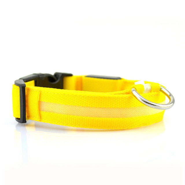 Luminous LED Ribbon Collar