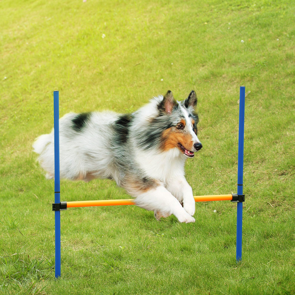"Outdoor Dog Agility Training Equipment ""All Proceeds Goes Towards Saving Animals"""
