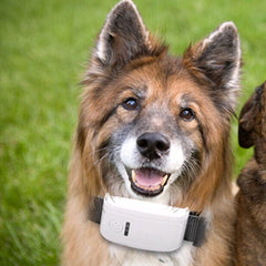 Mini GPS Real Time Location Trackers For Dog/Cat -All Proceeds Go Towards Saving Animals