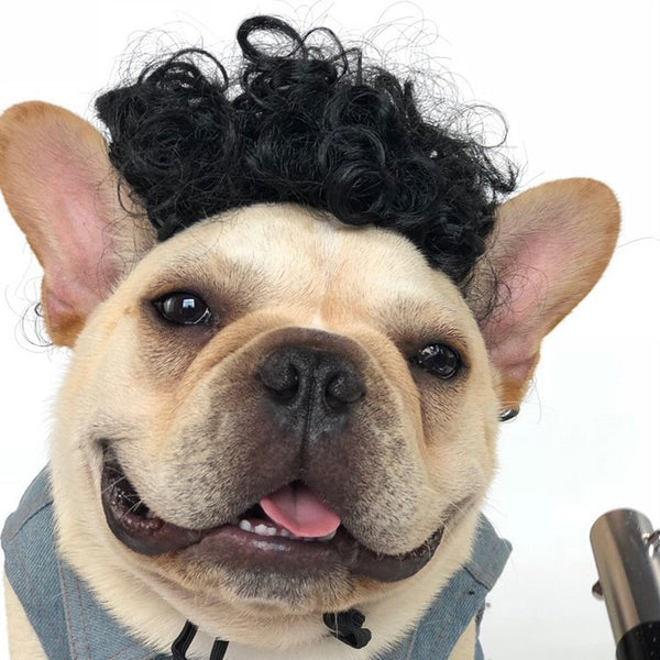 Pet Wig -All Proceeds Go Towards Saving Animals