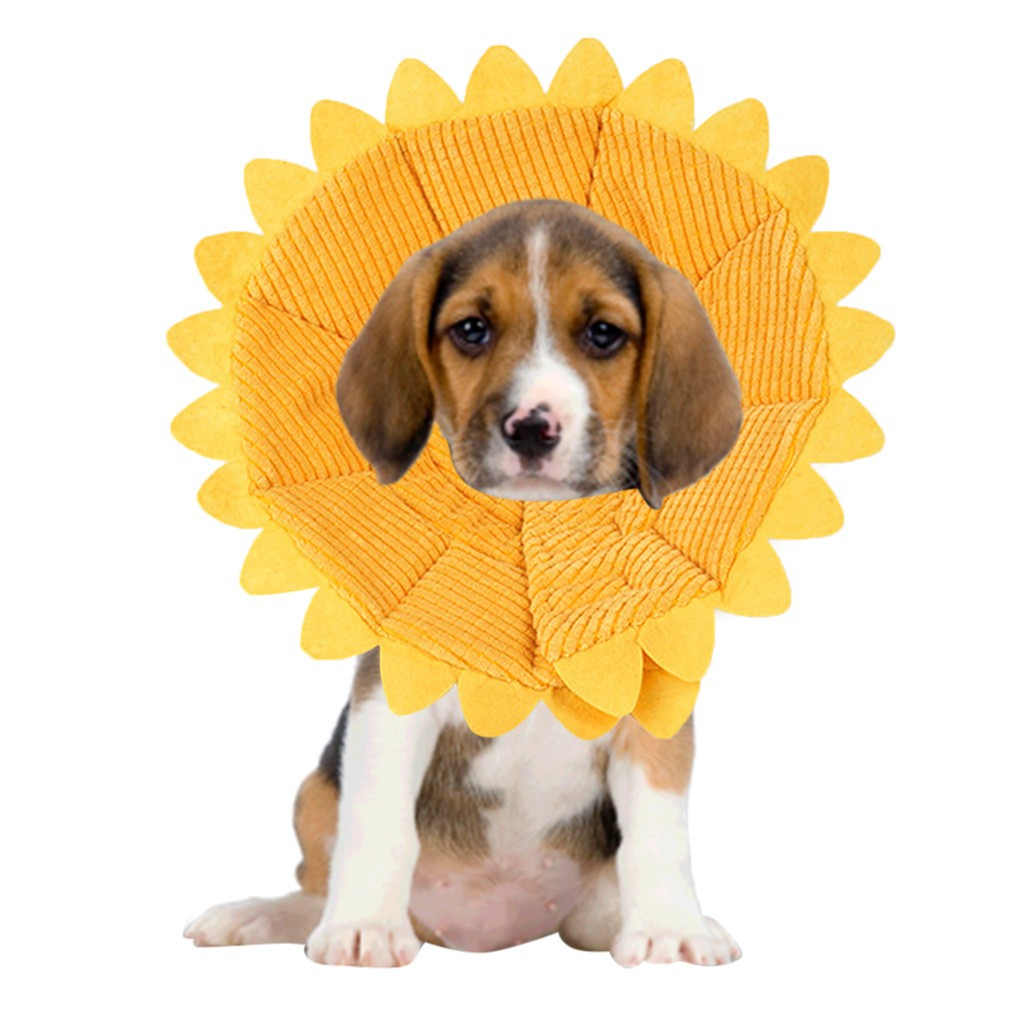Sunflower Dog Anti-bite Collar -All Proceeds Go Towards Saving Animals