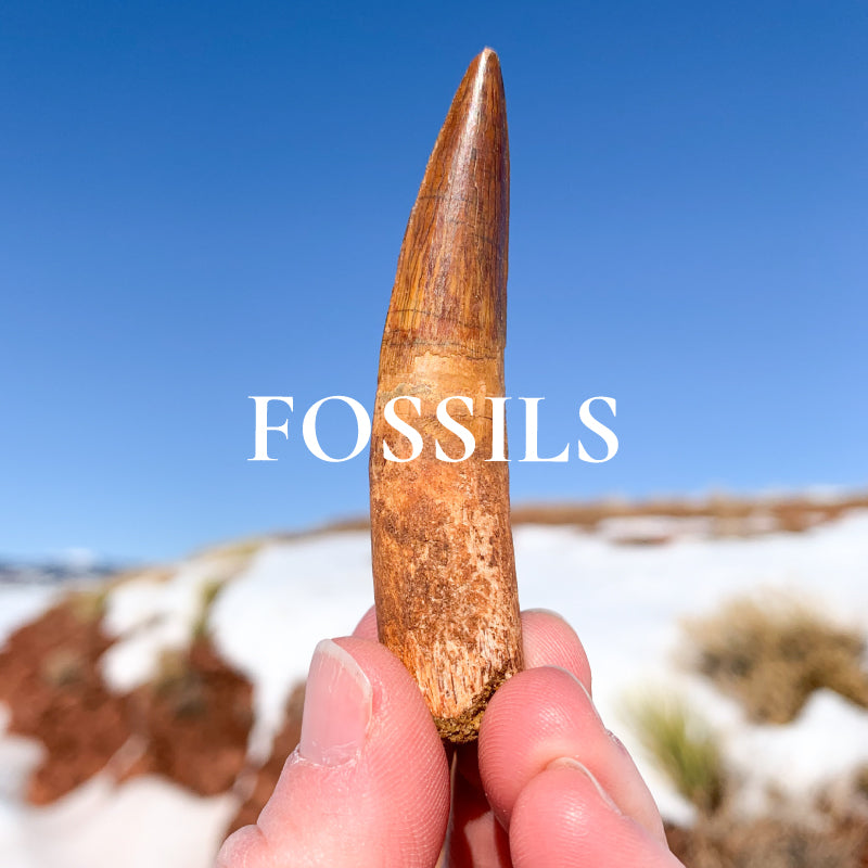 Fossil Collections for Sale at Unearthed