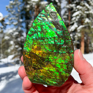"Large Ammolite ""Dragon skin"" Ammonite Shell"