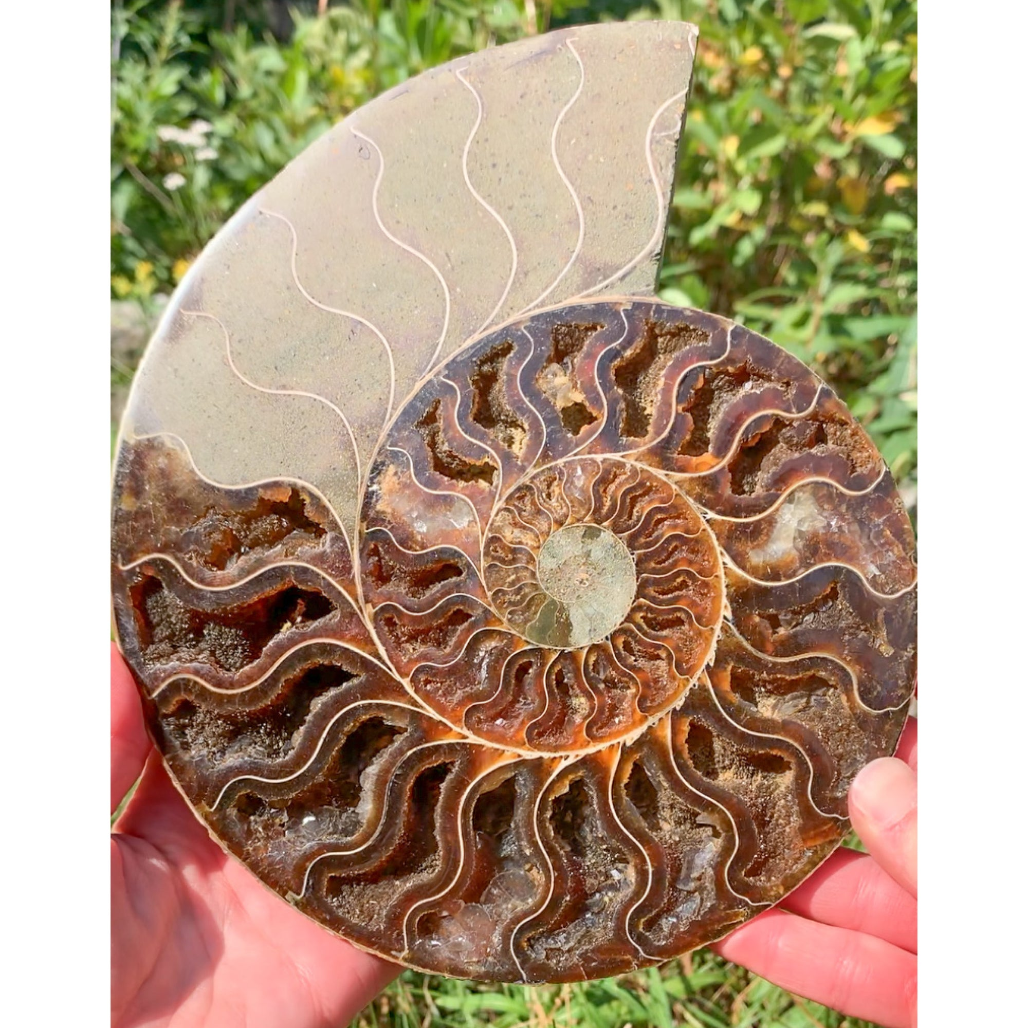 Extra Large Fossil Ammonite Pair from Madagascar with Calcite Crystals (Cut and Polished Pair)