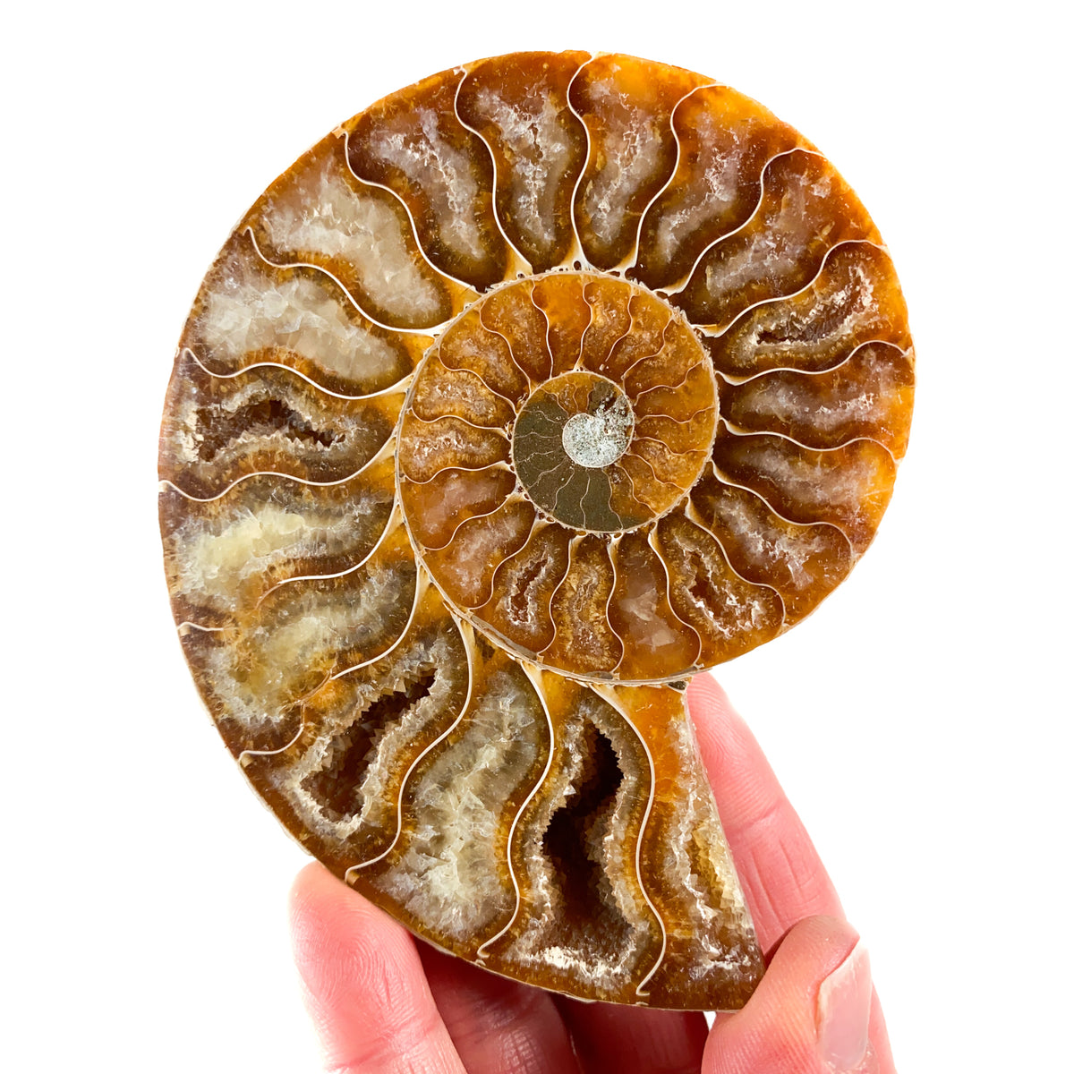 Cut and Polished Ammonite Fossil Pair with Calcite Crystals from Madagascar