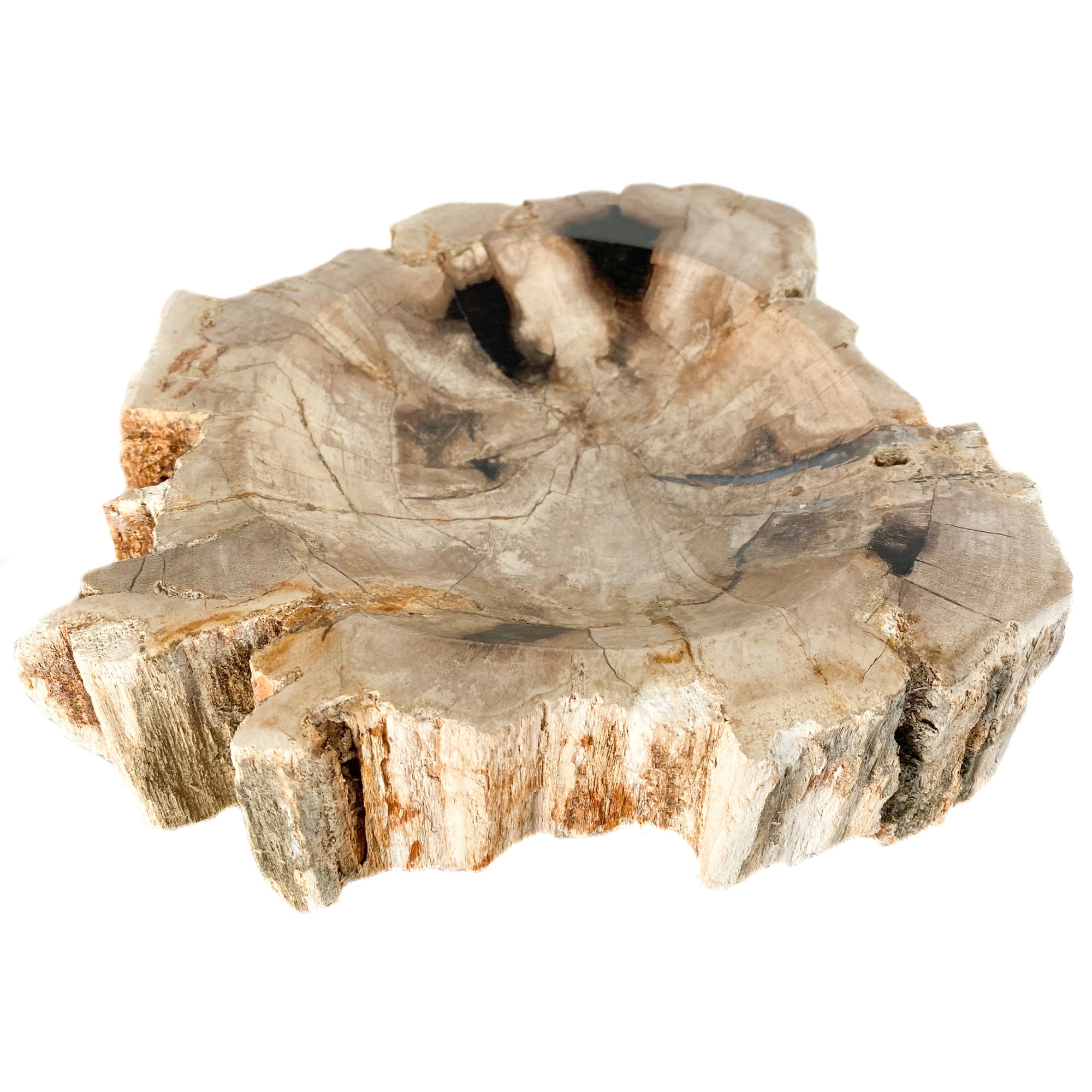 Petrified Wood Bowl / Dish from Indonesia