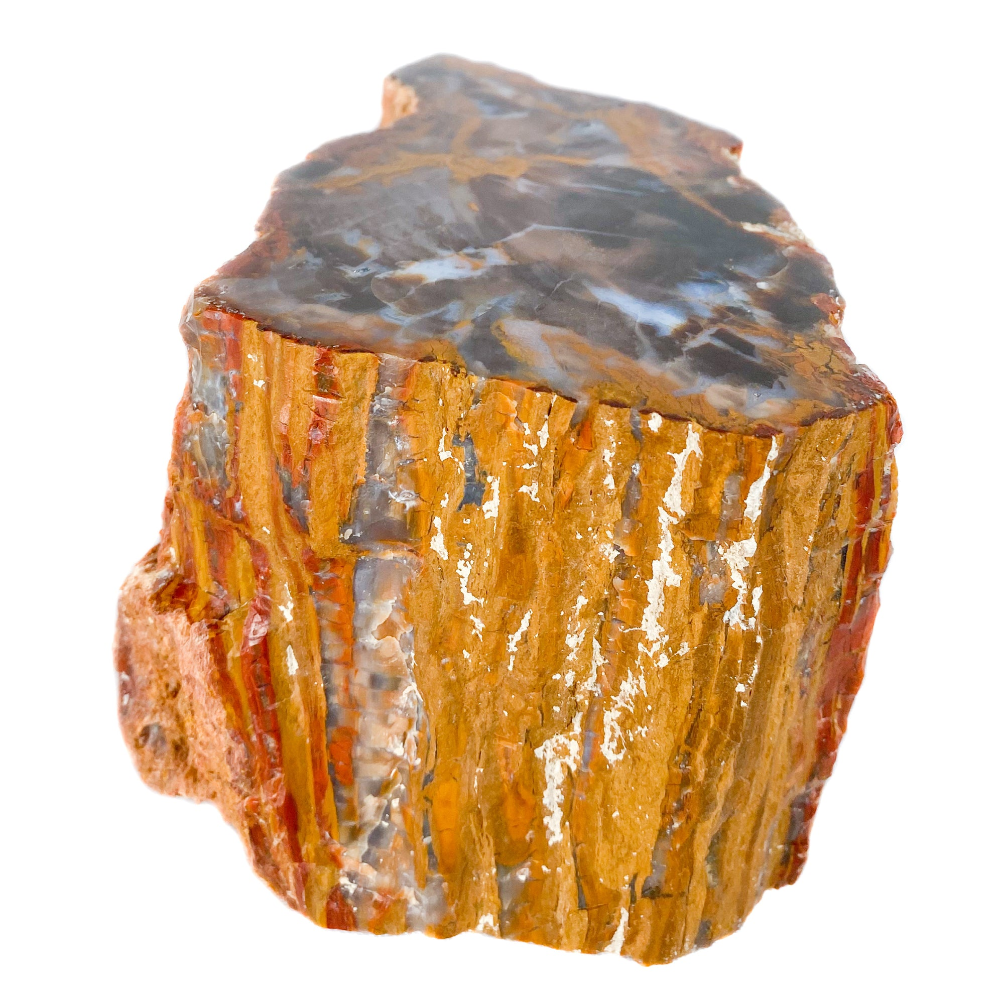 Red Orange and Blue Petrified Wood from Parker, Colorado