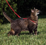 PetSafe Come with Me Kitty Red & Cranberry Harness and Bungee Leash for Cats