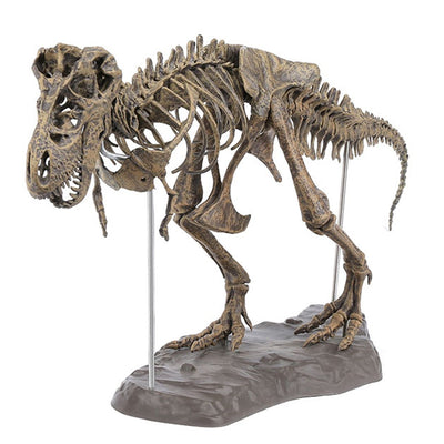 Action & Toy Figures - T-Rex Skeleton Model
