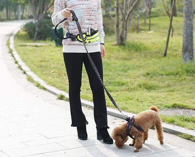 Dog Hands-Free Adjustable Elastic Leash - dailytravelvibe