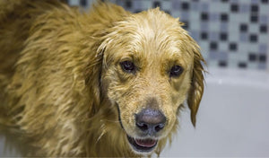 Tips for Washing Your Pet
