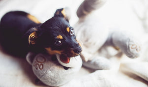 Keeping Your Pet Entertained Indoors