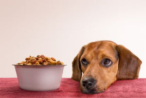 Is My Dog Food Going to Cause Heart Disease?