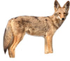Coyote Decoy Goose Control Animal Control #1 Best Seller Scare Birds and Geese