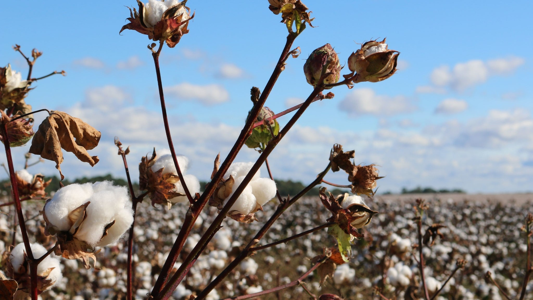 Why You Should Choose Organic Cotton Over Regular Cotton