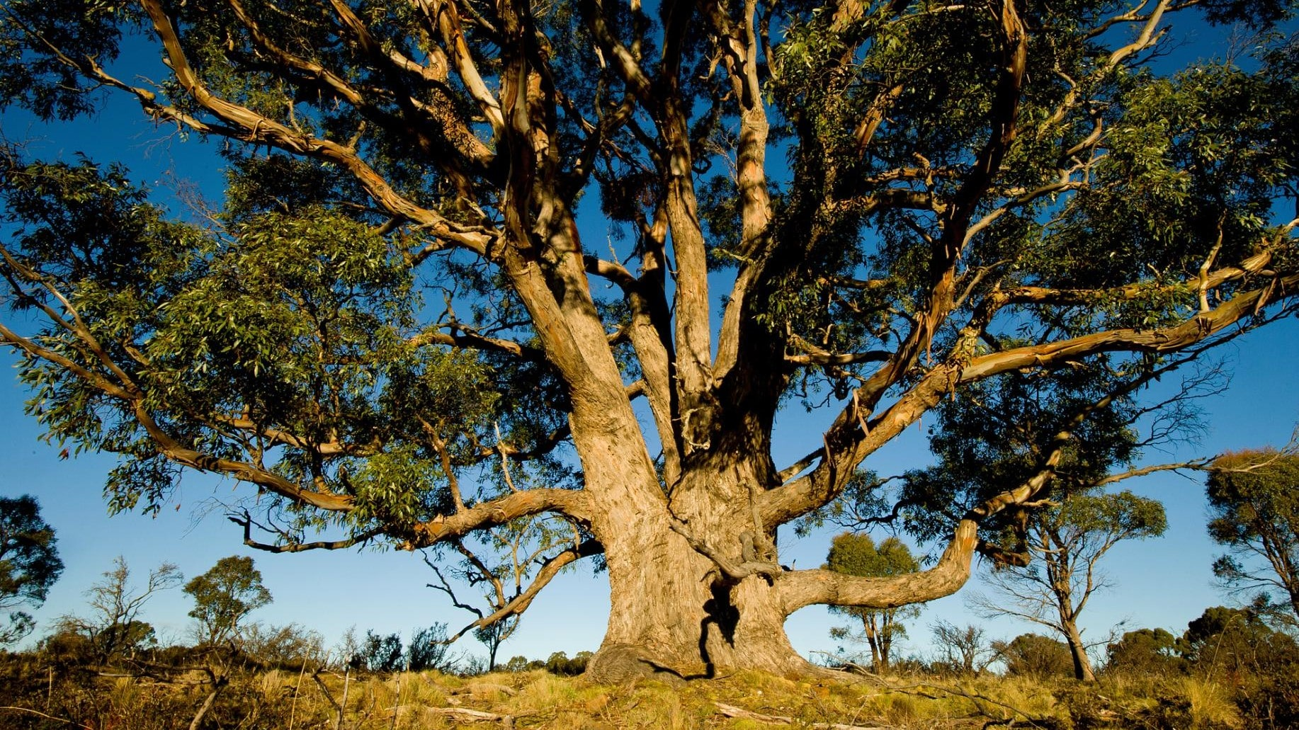 Eucalyptus and Beechwood: From Trees To Athletic Apparel