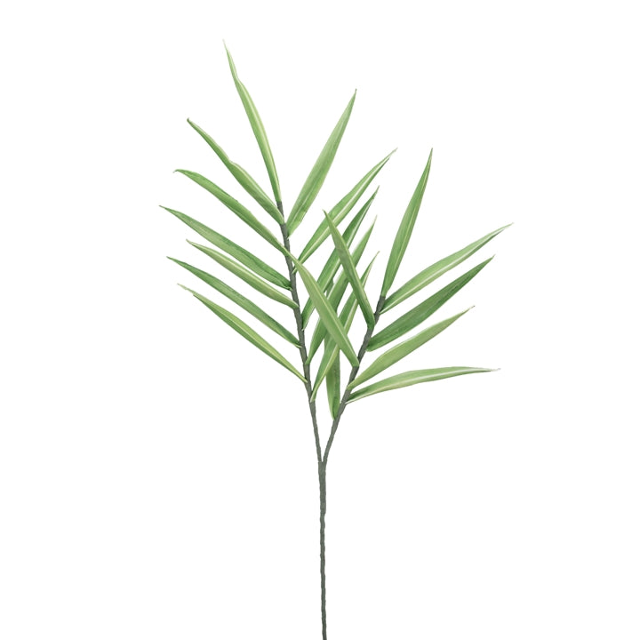 Desert Tropic Spike Grass - 48 Inch