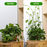 Plant Climbing Wall Fixture (Garden/Home Decor)