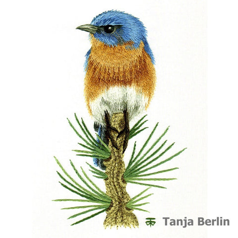 Eastern Blue Bird on Pine Branch for Beginners