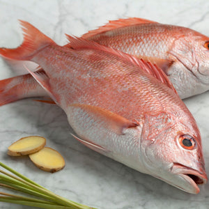 snapper whole cleaned and scaled wild brazil