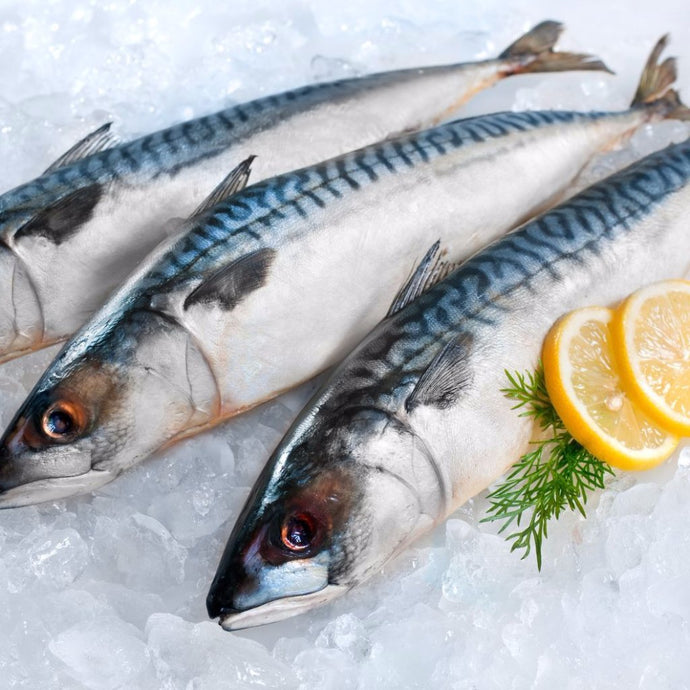 mackerel whole frozen