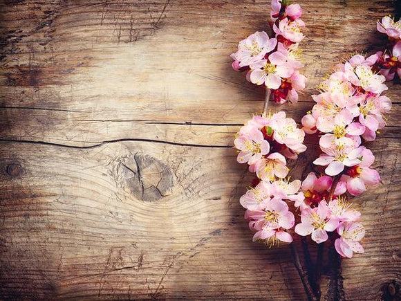 Soft Pink Flowers Photography Wallpaper