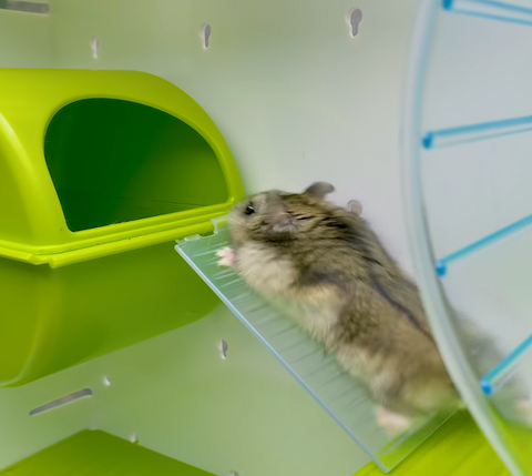 Hamster cage and play area all in one - easy assembled to give the best hamster home