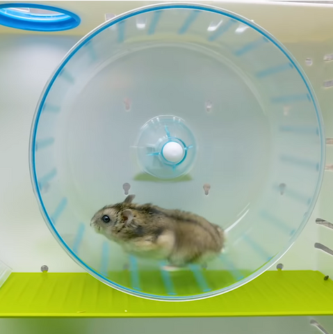 Hamster wheel and tubes - the best play area in this hamster cage