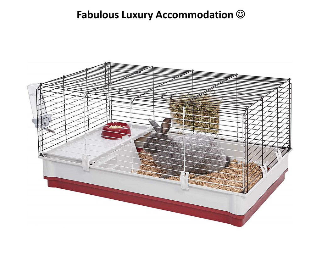 Guinea pig cage ensures your favorite animals can be inside all the time!