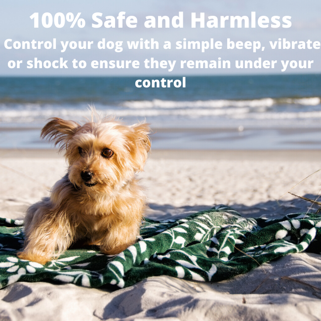 Whether in the park, on the beach or at home, you can use our small dog training collars  to ensure that your toy dog is under control and SAFE