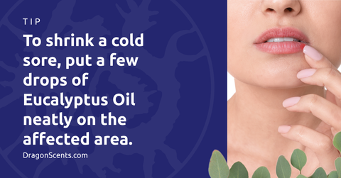 To shrink a cold sore, put a few drops of Eucalyptus Oil neatly on the affected area.