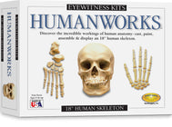 Box showing Eyewitness Kits Humanworks activity set with skull and hand bones cast paint assemble 18 inch human skeleton toy