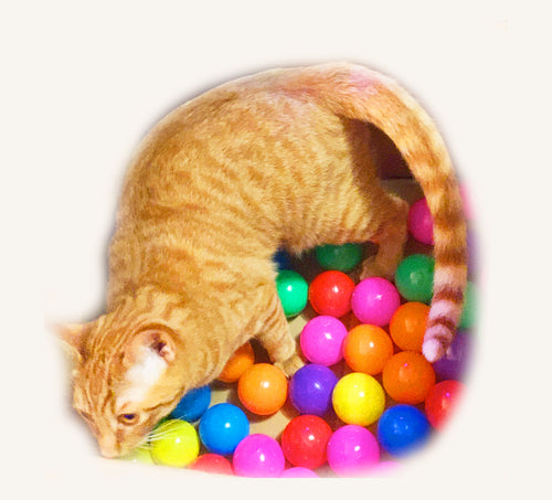 Kitty Play Balls