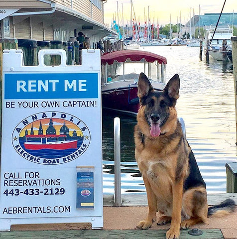 Annapolis Electric Boat Rentals sign with Dog fan