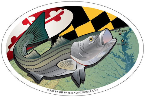 Maryland Rockfish Oval Magnet, 6x4