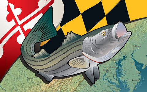 Maryland Rockfish Door Mat by Joe Barsin, 30x18