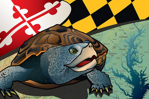 Maryland Terrapin Canvas Print by Joe Barsin, 12x8x.75