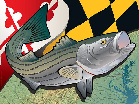 Maryland Rockfish Art Print by Joe Barsin, 16x12