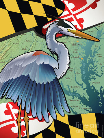 Blue Heron of Maryland - Art Print