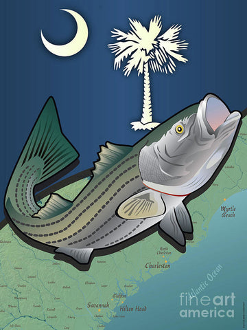South Carolina Striped Bass - Art Print