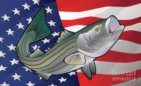 USA Rockfish Striped Bass - Art Print