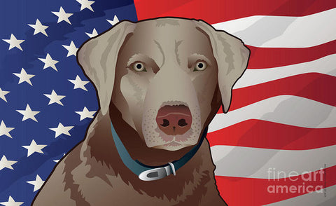 USA Silver Lab - Art Print