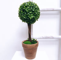 Medium Topiary Ball Tree in a Pot