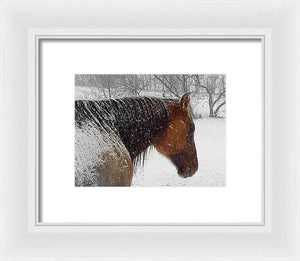 Cody - Framed Print - The Horse Barn