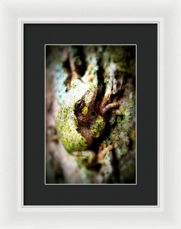 Leveli Beka Ketto - Framed Print - The Horse Barn