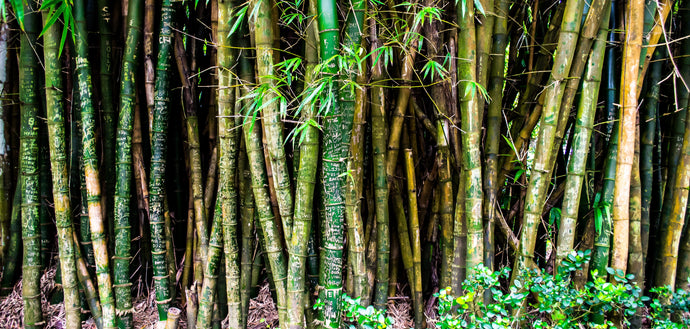 The Sustainability of Bamboo Rayon