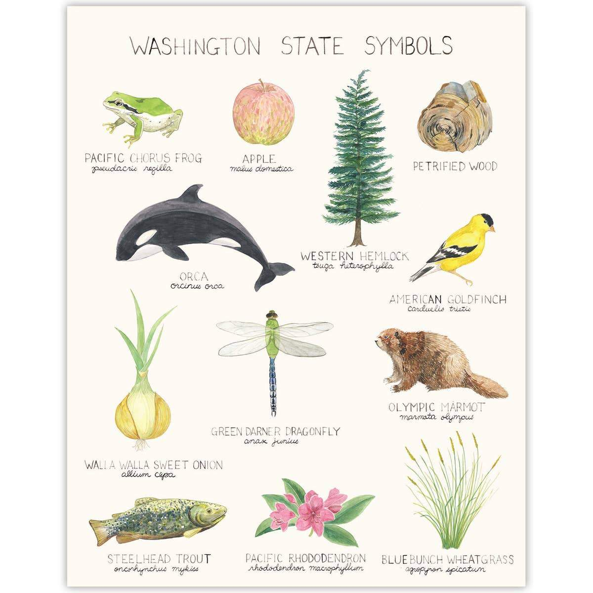 "Washington State Symbols Art Print - 11"" x 14"""