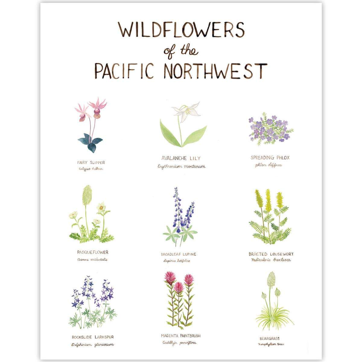 "Pacific Northwest Wildflowers Art Print - 11"" x 14"""